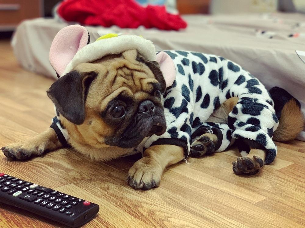 Chó Bucky đang được nhiều lượt share nhất trên mạng xã hội.