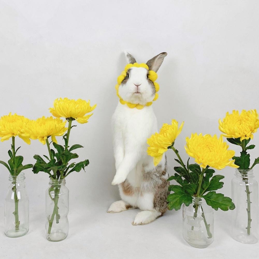 Thỏ Áp Chảo tạm dẫn đầu hạng mụcThe Funniest Pet.