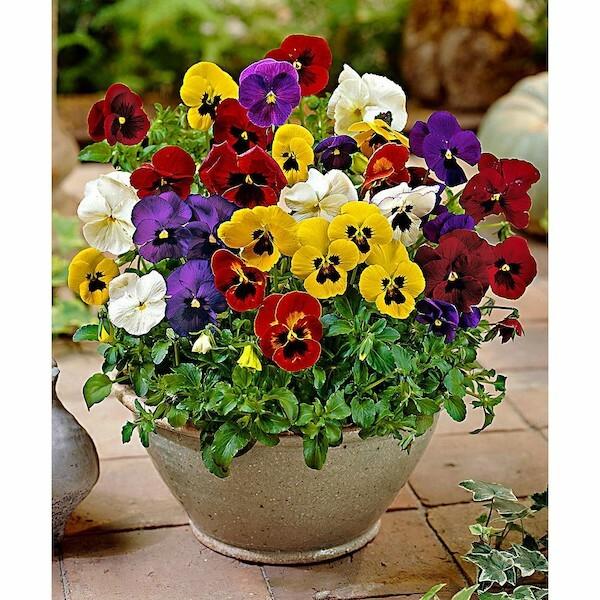 Nếu là 1 bông hoa, 12 cung hoàng đạo sẽ là loài hoa nào? - 18