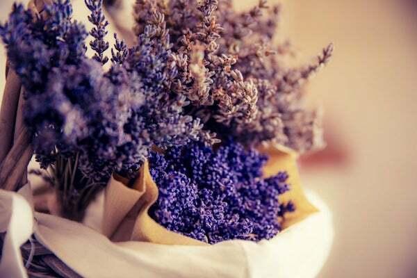 Nếu là 1 bông hoa, 12 cung hoàng đạo sẽ là loài hoa nào? - 4