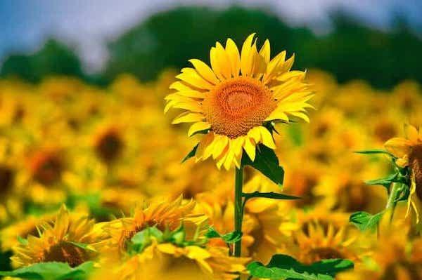 Nếu là 1 bông hoa, 12 cung hoàng đạo sẽ là loài hoa nào? - 8