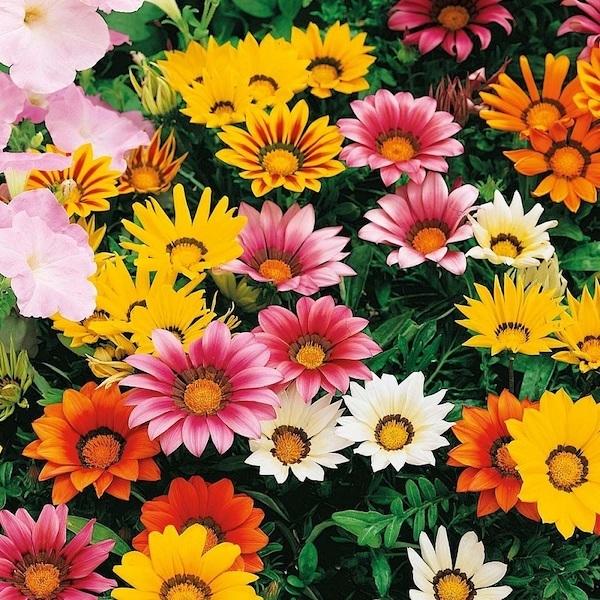 Nếu là 1 bông hoa, 12 cung hoàng đạo sẽ là loài hoa nào? - 14