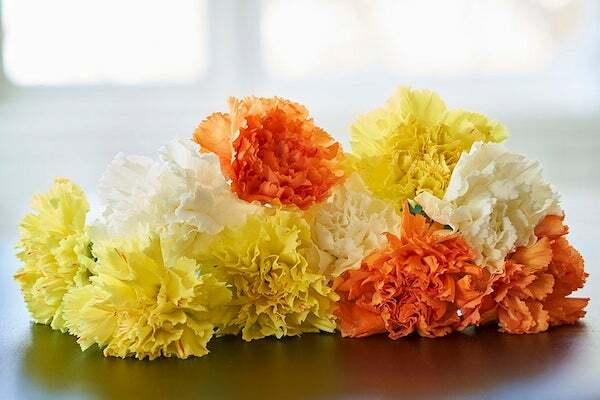 Nếu là 1 bông hoa, 12 cung hoàng đạo sẽ là loài hoa nào? - 16