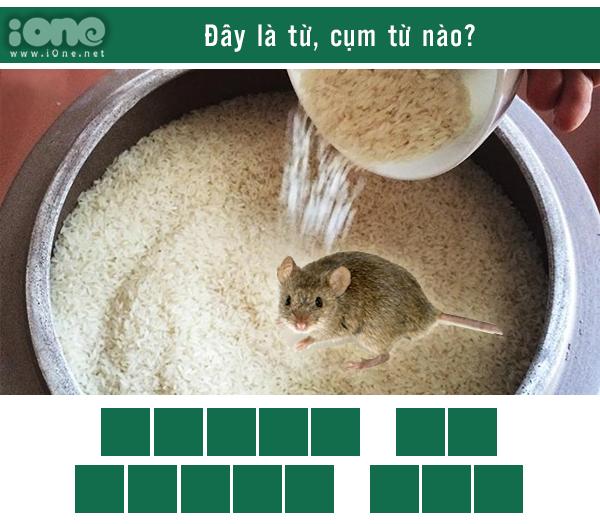 Quiz: Thánh ngôn ngữ nhìn phát biết ngay đây là từ gì? - 14