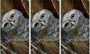 8 thử thách chỉ dành cho người có thị lực hoàn hảo