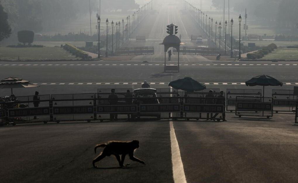 Một con khỉ băng qua đường gần Dinh Tổng thống hôm 22/3 tại New Delhi.
