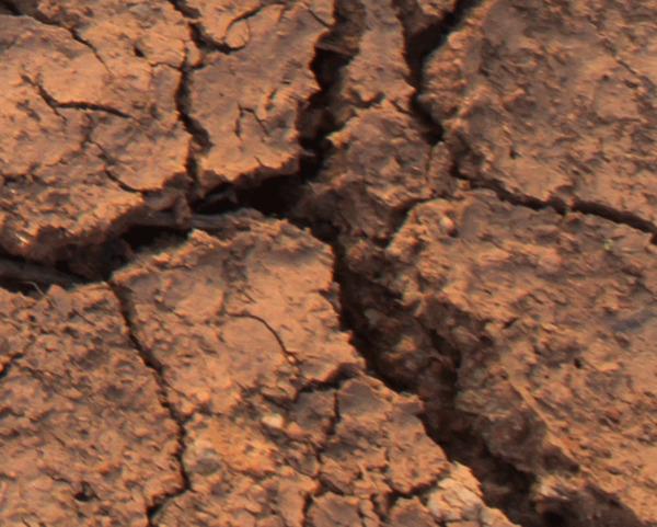 Bánh cookies ngon lànhhay mặt đất bẩn thỉu? - 2