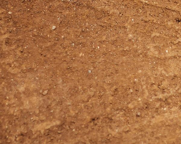 Bánh cookies ngon lànhhay mặt đất bẩn thỉu? - 4