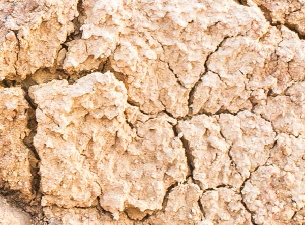 Bánh cookies ngon lànhhay mặt đất bẩn thỉu? - 12