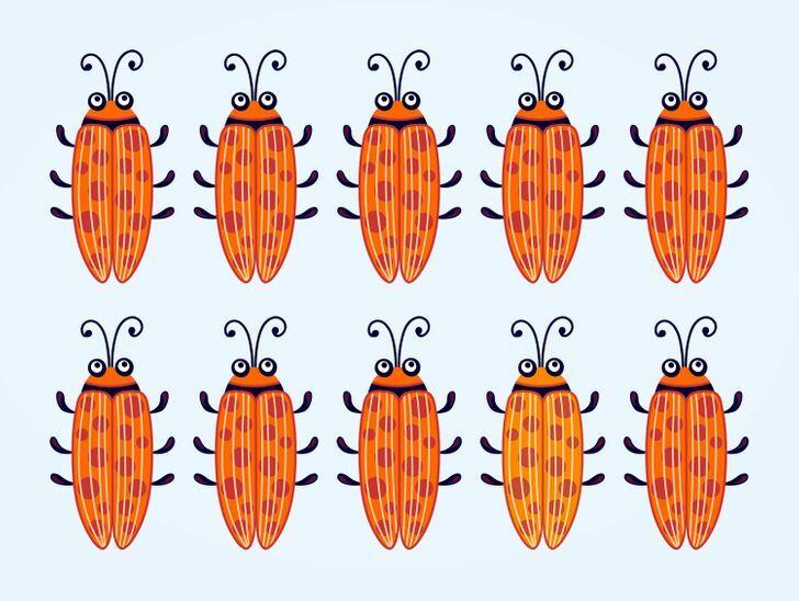 Soi kính lúp tìm con bọ có màu sắc khác lạ