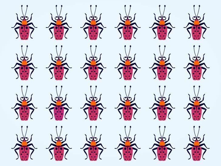 Soi kính lúp tìm con bọ có màu sắc chẳng giống ai (2) - 6
