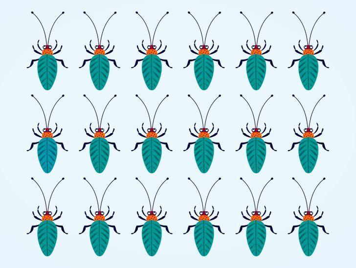 Soi kính lúp tìm con bọ có màu sắc chẳng giống ai (2) - 10