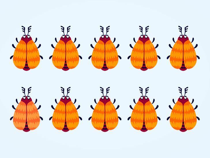 Soi kính lúp tìm con bọ có màu sắc khác lạ - 4