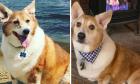 'Nhan sắc' ngỡ ngàng của hội thú cưng sau giảm cân