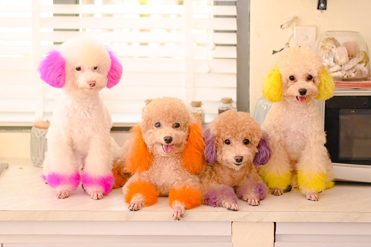 Gia tài 8 chú cún cưng trăm triệu của Sĩ Thanh - 2