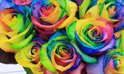 Người có thị lực hoàn hảo sẽ không nhận nhầm màu (5)